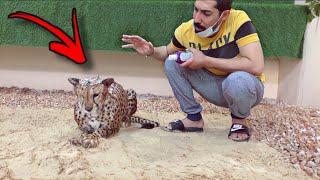 تحدي اني اروش الفهد ( شيخه ) 🐆 لاول مره بحياتها !! بدون ماتعضني 💔😱