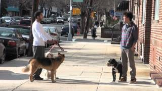 Pit Bull Terrier Aggression - Nyc Dog Training - Dctk9 - Part 6