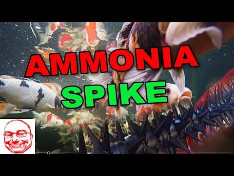 Ammonia Spike.