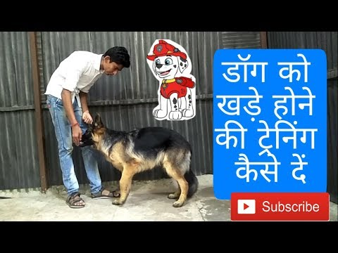 How to train a dog to stand on Command (Hindi)| Dog training in Hindi |