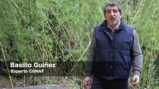 Documental Hantavirus en Chile.
