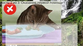 Как оказать помощь кошке при отравлении