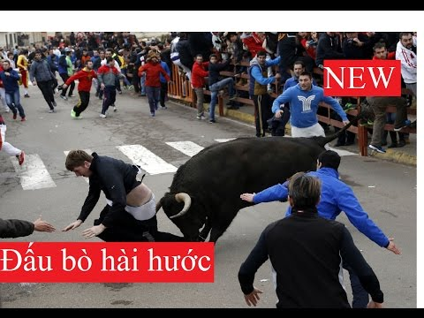 HahaTV - Cười vỡ bụng với những trận đấu bò tót hài hước nhất thế giới