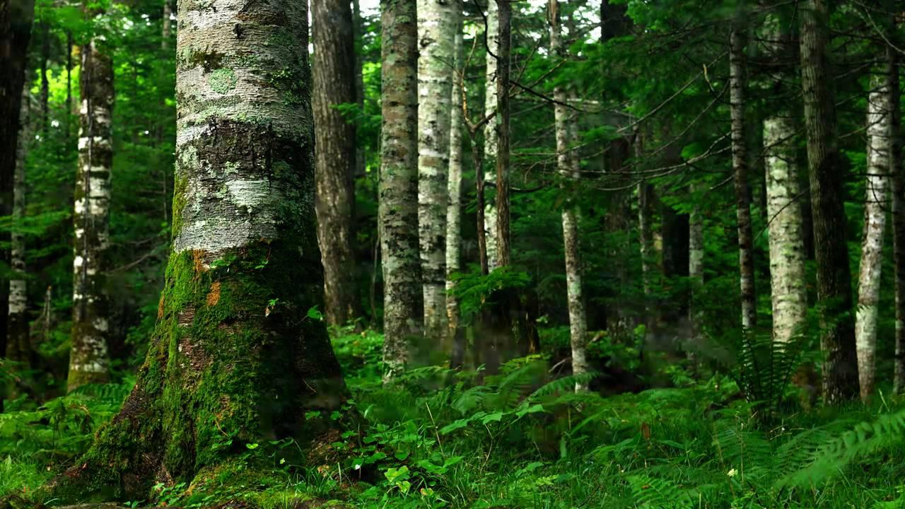 森のスライドショー(フィンラン...