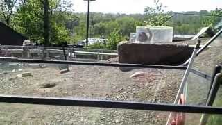 Lavanthi at Turtle Back Zoo -Part 2