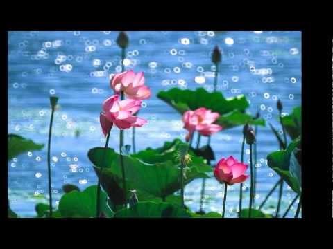 Em Về Kẻo Trời Mưa -  Giọng hát cô gái Quảng Nam Ánh Tuyết