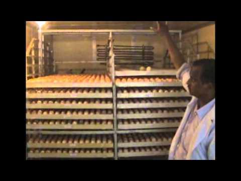 GOVT POULTRY FARM DIVISION INDORE DR SM SHEIKH NOVEMER 2014