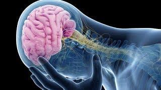 Estas 4 plantas protegem seu cérebro de Alzheimer, Depressão, Ansiedade e outros problemas – Veja