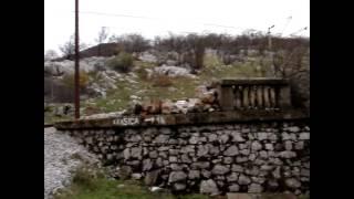 Satničko Jelenje Krasica Bakar Kuzam