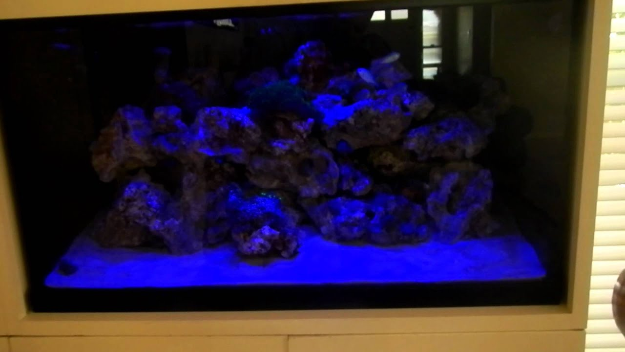 Fish tank night light youtube for Youtube fish tank