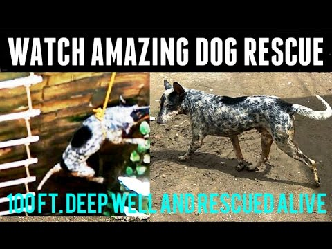 AMAZING DOG RESCUE. A Dog Fell into 100 ft. deep well and rescued alive by JMC fire brigade Junagadh
