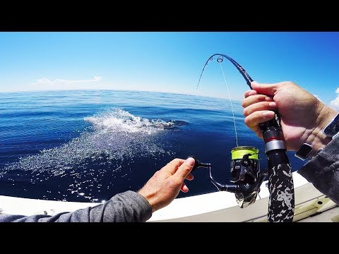 Fishing Light Tackle In Shark Infested Water