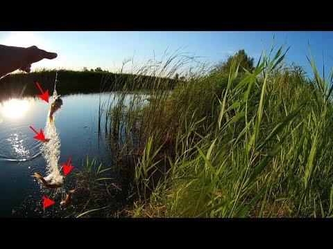 Рыбалка на сетку с кормушкой с Алиэкспресс хороший улов рыбалка на видео