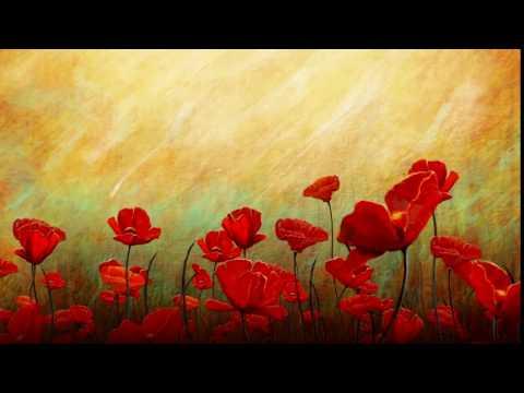 Free HD Wedding background, Free download motion background, Free  HD Flower background - FLOWER 003 thumbnail