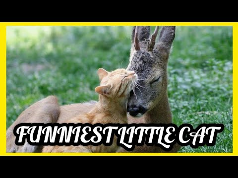 sweet-cats-video-compilation,-funniest,-little-cat,-funny-cat-video