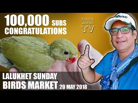 Lalukhet Sunday Birds Market Karachi | 100,000 Subs | Baby Parrot for Sale | Video in URDU/HINDI