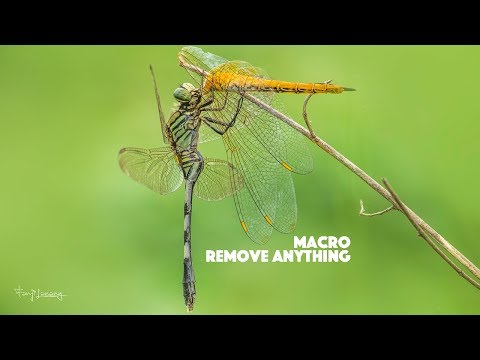 Macro Photo Editing & Remove Anything | Photoshop CC Tutorial thumbnail