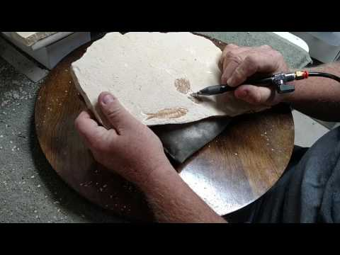 Quick Video Cleaning Green River Fish Fossils