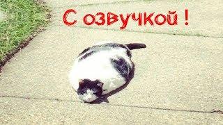 СМЕШНЫЕ КОТЫ С ОЗВУЧКОЙ – Лютые приколы с котами и кошками (Смешные кошки, мемы в видео) 2019
