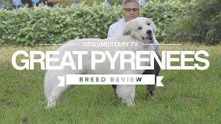 GREAT PYRENEES BREED REVIEW