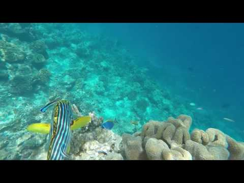 Snorkeling in Maldives (June 2017)