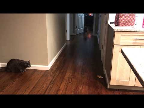 Cat Pranks one scares another