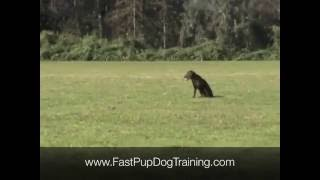 How To Train Your Dog To Sit On A Whistle
