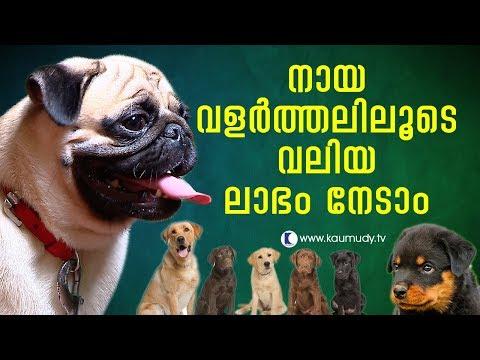 Dog breeding can bring you big profits | Haritham Sundaram EP 139 | Kaumudy TV