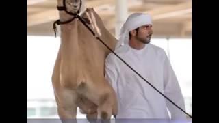 سيدي حمدان ..بصوت عيضه المنهالي
