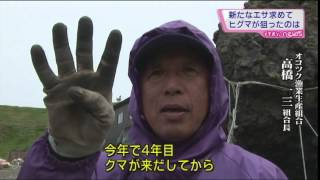 【MIKIOジャーナル】知床のヒグマに異変