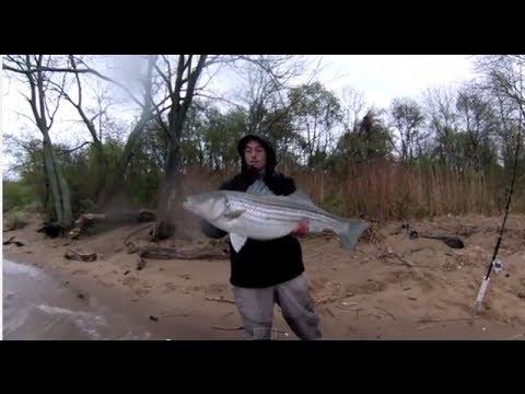 Delaware River Striper Fishing spring 2014