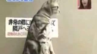 Кошка - суслик