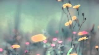 Phaeleh - In The Twilight