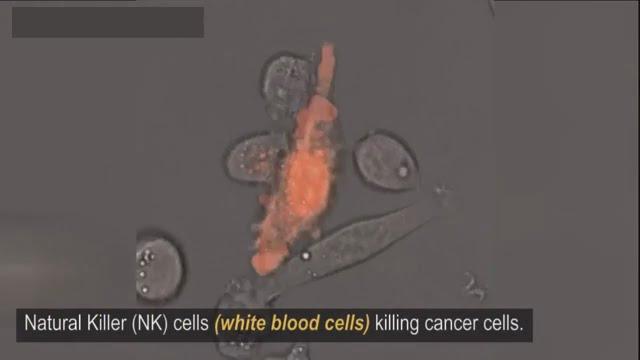Natural Killer Cell White Blood Cells Killing Cancer
