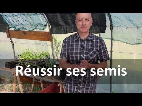 Réussir ses semis de plantes médicinales