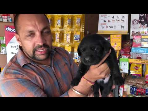 Pet Care - Know About Mix Breed - Bhola Shola