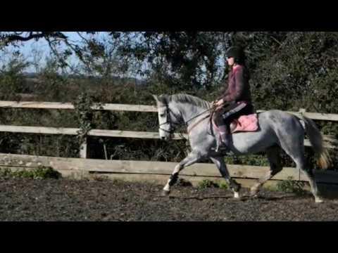 FOR SALE : 14.1 Competiton Pony – Lenamoore Hero