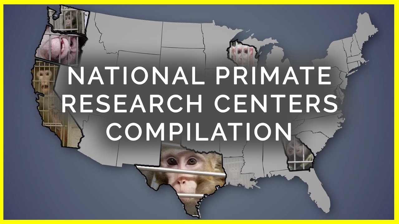 National Primate Research Centers: Taxpayer-Funded Pain and Misery