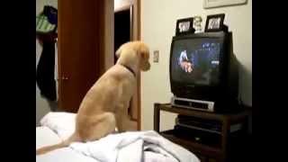Щенок смотрит передачу про собак