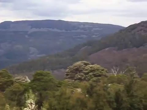 Central Plateau Conservation Area (TAS): Liffey Forest Reserve - 180˚ view