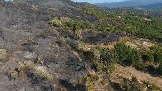 Incendies en Corse: la piste pyromane privilégiée, selon les élus