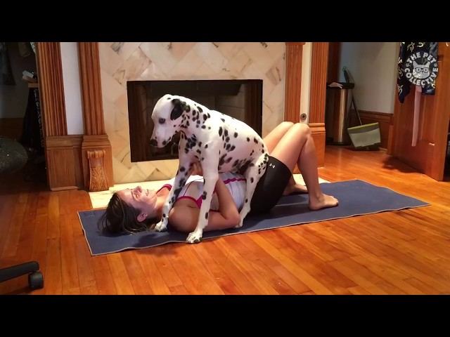 "Dalmatian Interrupts Yoga Session ""Can I play, too?"""
