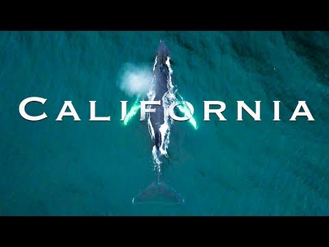 Paddle Boarding with Whales | Beautiful Coastal California Road Trip