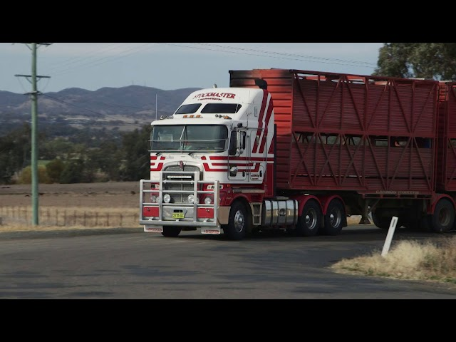 PACCAR Portraits – Cavanagh Stockmaster Group