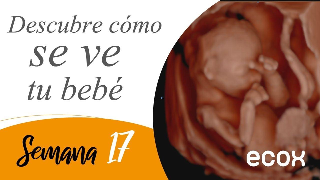 Tamano feto 21 semanas