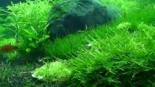 серия видео аквариумы(формы аквариума могут быть различные как и названия., 2014-01-29T17:19:02.000Z)