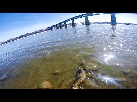 Fishing for 8 lb Brown Trout in the South Saskatchewan River