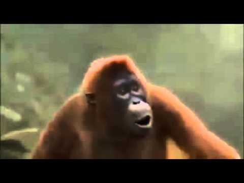 Affe tanzt endlich Wochenende
