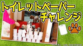 【夫人の愛犬大集合】トイレットペーパーチャレンジ #stayhome #犬