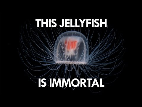Jellyfish are the key to Immortality